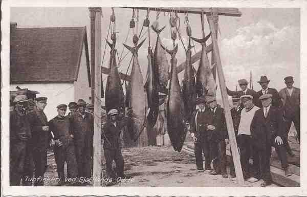 Fangsten af store tun har tidligere spillet en stor rolle i Odden Havn og flere andre steder i Danmark. Nu skal et nyt forskningsprojekt med hjælpe fra lystfiskere være med til at indsamle ny viden om tunens tilbagevenden.