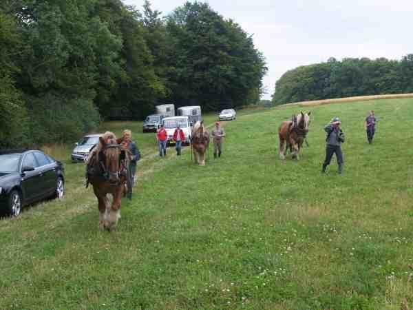 Nok er det højst usædvanligt at bruge heste til mijøarbejde, hestene får rørt sig i den gode sags tjeneste.