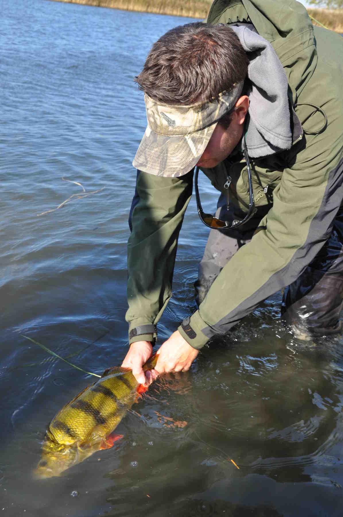 Store individer er afgørende for sunde fiskebestande og bør beskyttes frivilligt.