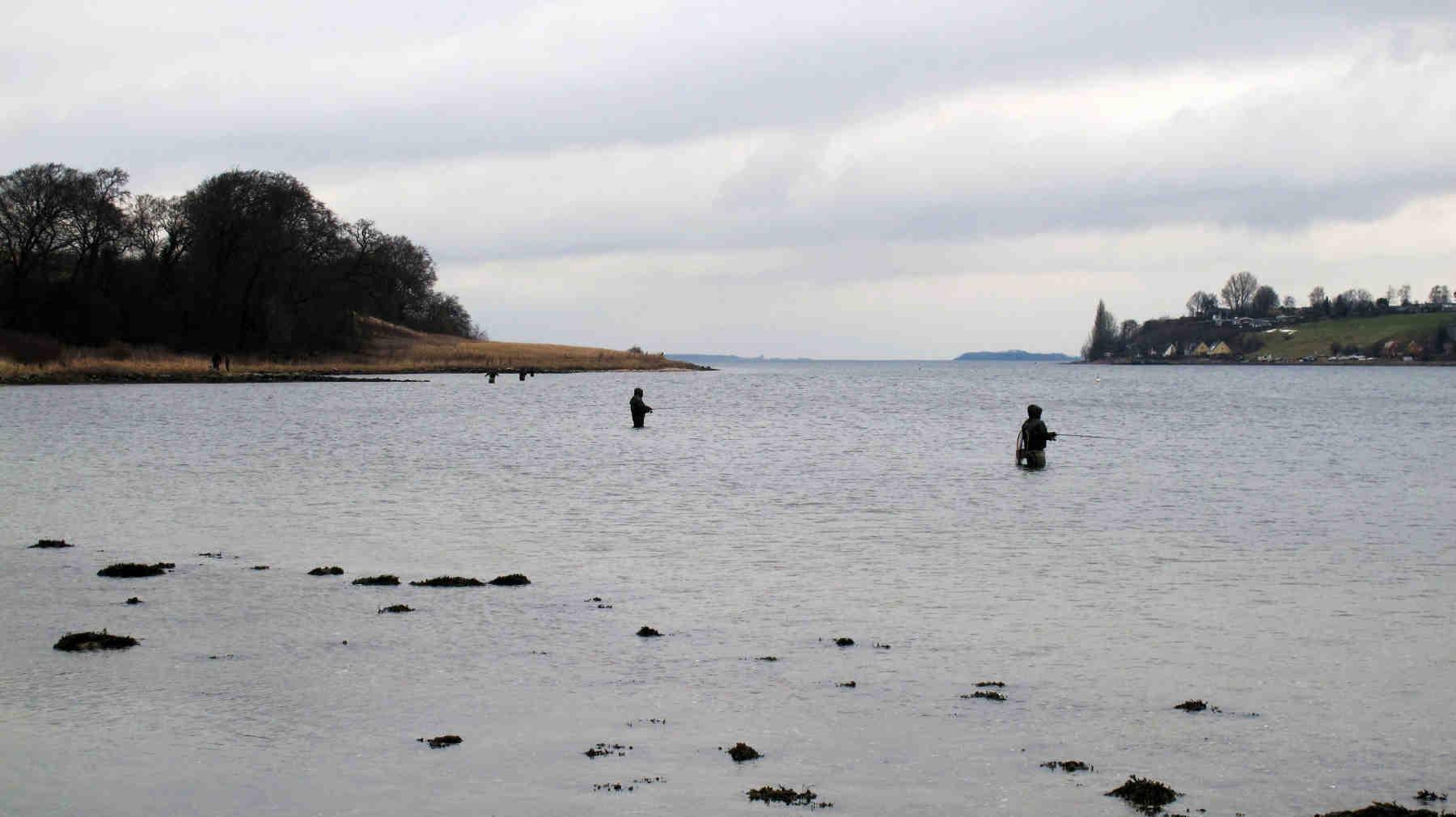 Der var mange fiskere - men også mange fisk i Bramsnæs Vig i dag.