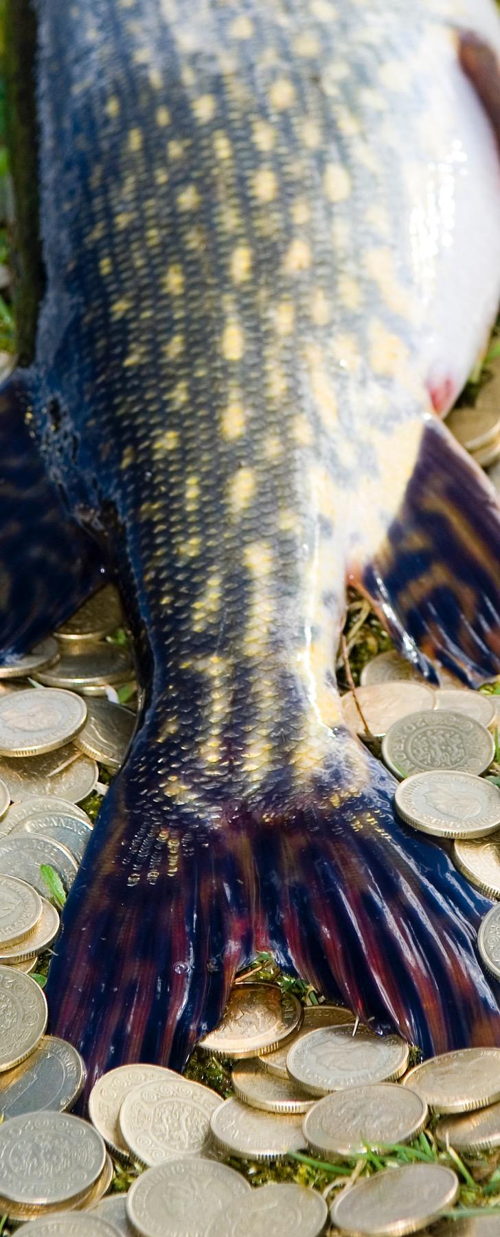 Sportsfiskeri er guld værd