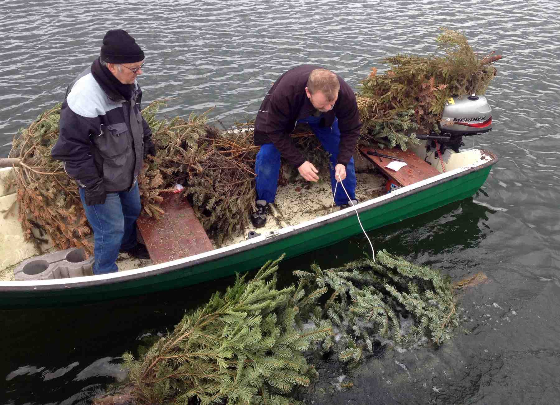 Udlægning af juletræer