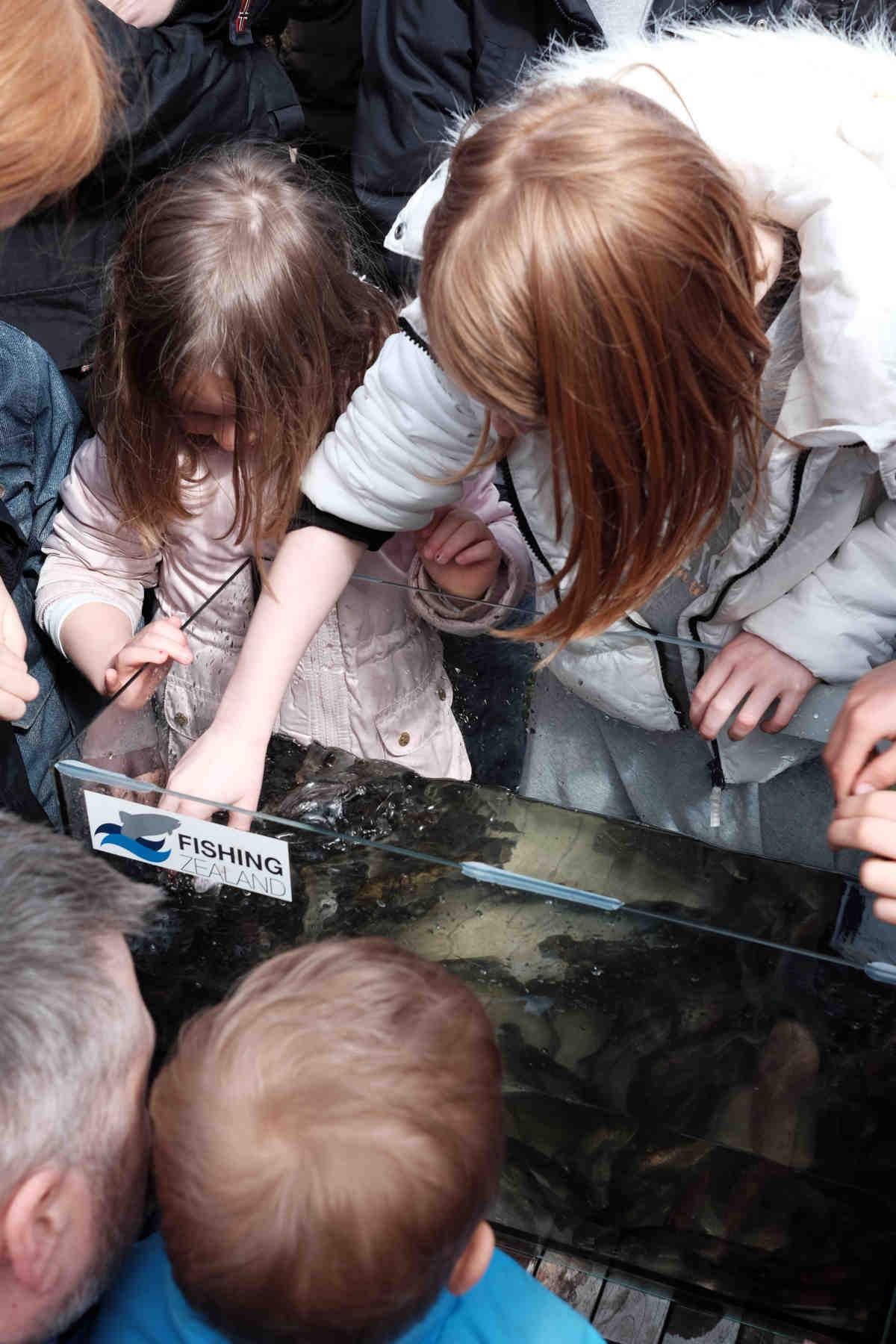 billed-2-orreder-helt-taet-pa%cc%8a-i-akvarier