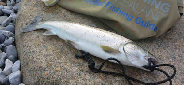 billed-en-af-lars-juel-hansens-mange-fisk