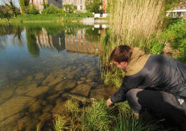 En lystfisker genudsætter en gedde i Søerne i forbindelse med